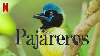 Pajareros (2019)